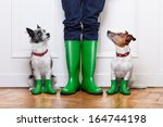 two terrier dogs waiting to go... | Shutterstock . vector #164744198
