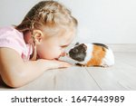 Girl Holding A Guinea Pig In...