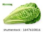 romaine  cos lettuce. 3d... | Shutterstock .eps vector #1647610816
