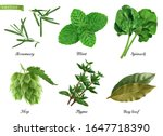greens and spices realistic... | Shutterstock .eps vector #1647718390