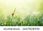 Spring Nature Background. Green ...