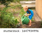 Boy Nourishes A Garden With A...