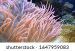 Sea Anemone Floating In Water ...