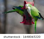 Quaker Birds  Also Known As...