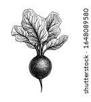 beetroot with tops. ink sketch... | Shutterstock .eps vector #1648089580