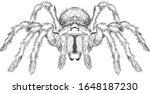Tarantula Spider Black And...