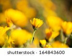 yellow daisy with beautiful... | Shutterstock . vector #164843600