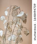 Dried Lunaria Plant In The Vase