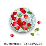 songkran festival thailand rose ...   Shutterstock .eps vector #1648592239