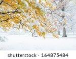 Autumn Leafs Under First Snow