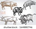 pig vector set 2 | Shutterstock .eps vector #164880746