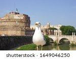 Proud Seagull Posing In Rome