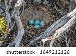 Bird Nest Guide. Nest Of Song...