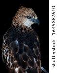 The Javan Hawk Eagle  Nisaetus...
