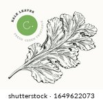hand drawn sketch style kale... | Shutterstock .eps vector #1649622073