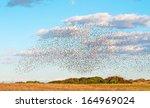 Huge Bird Flock Flying Over A...