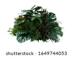 Tropical Foliage Plant Bush ...