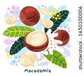 fresh macadamia juice splash... | Shutterstock .eps vector #1650100006