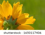 close up of back side of yellow ... | Shutterstock . vector #1650117406