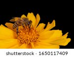 close up of bee on yellow... | Shutterstock . vector #1650117409