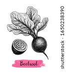 beetroot with tops. ink sketch... | Shutterstock .eps vector #1650238390