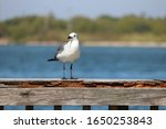 A Seagull Perched On The Pier...