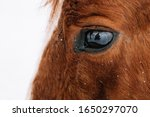 Eye Of A Red Horse