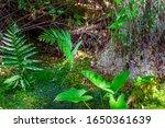 Forest Swamp Land In Okefenoke...