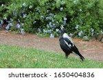 In the garden, head up to the sky, tweeting bird