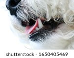 A Close Up Of A Dog\'s Face...