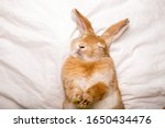 Funny rabbit sleeps on white...