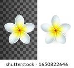 plumeria tropical flowers 3d...