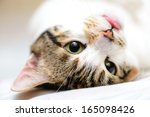 Stock photo up side down sleepy cat 165098426