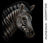 zebra. color  realistic  hand... | Shutterstock .eps vector #1650997540