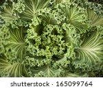 Cabbage Detail