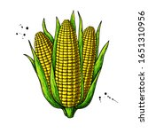 corn bunch hand drawn vector... | Shutterstock .eps vector #1651310956