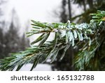 snow covered pine branch. small ... | Shutterstock . vector #165132788