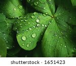 water and leaf - stock photo