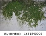 Concrete Wall With Moss And...