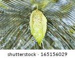Fallen Leaf On Flowing Water...