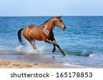 Horse Galloping Along The Beach