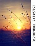 dry grass against winter sunrise | Shutterstock . vector #165197924