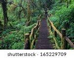 Wooden Bridge In Tropical Rain...