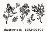 wild flowers botanical hand... | Shutterstock .eps vector #1652401606
