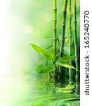 Bamboo Stalks On Water   Blurs