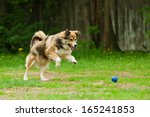 Stock photo dog playing with ball in the yard 165241853