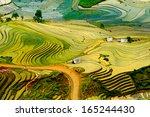 beautiful terraced rice field... | Shutterstock . vector #165244430