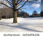 Beautiful Snow  Tree  And Yard...