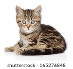 Stock photo scottish kitten looking at camera isolated on white background 165276848