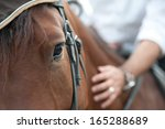 Stock photo closeup of a horse head with detail on the eye and on rider hand harnessed horse being lead 165288689
